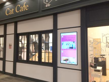 猫カフェにてSNSサイネージを導入